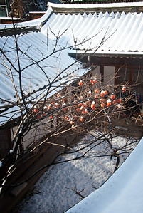 2012-12-04_Gyedong_SnowPersimmons-1622_HDR2