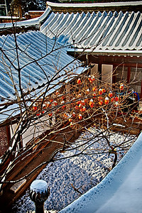 2012-12-04_Gyedong_SnowPersimmons-1622_HDR