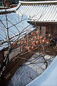 2012-12-04_Gyedong_SnowPersimmons-1622_HDR3