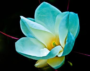 Midnight-Blossom-6733(Glossy300)