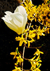 WhiteOnYellow-(1-of-1)