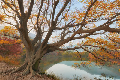 Autumn trees at Jinhae Eco Park