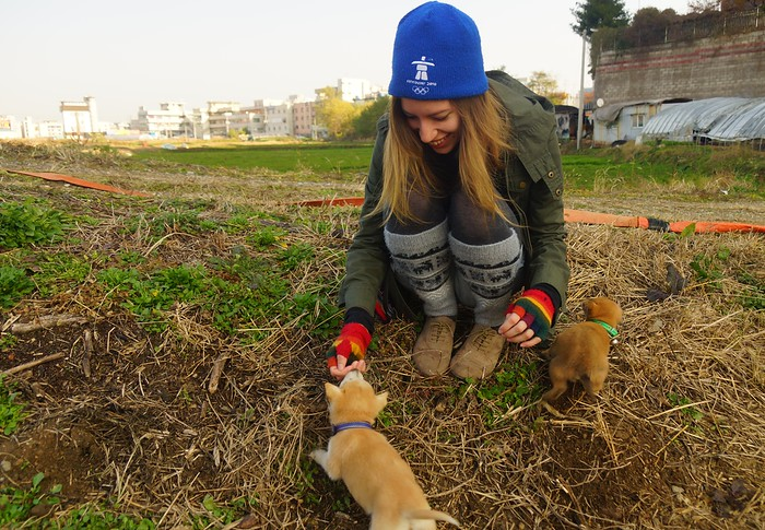 Playing with puppies in Pyeongtaek, South Korea.