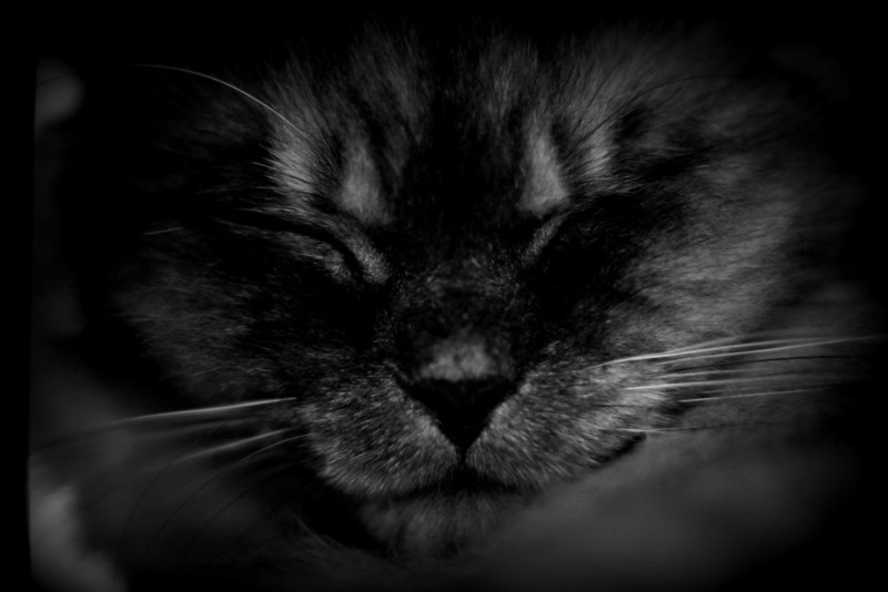 Our travel feature photo of the day is a close-up black & white shot of a cat sleeping in the cat cafe we visited in Hongdae - Seoul, Korea.