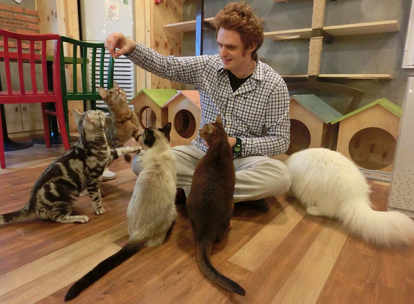 Sam feeding cats at a cat cafe in Seoul