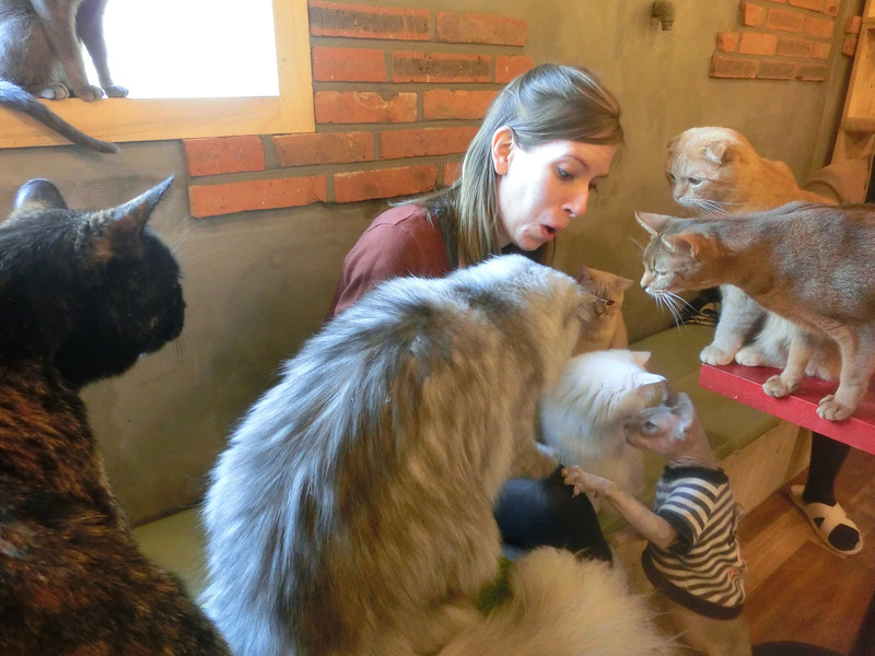 Audrey feeding cats at the cat cafe