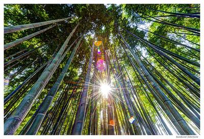 Bamboom! - Photos of Korea