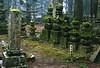 Sépultures à l'intérieur de la grande nécropole. Koya San/Ile de Honshu/Japon