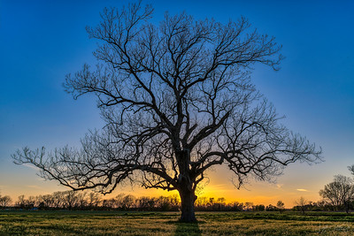 End of the day at the old Pecan tree!