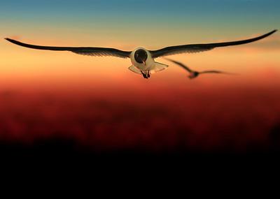Soundless Flight