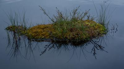Speiling i Tritjønn