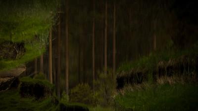 Den mystiske skogen i Iveland
