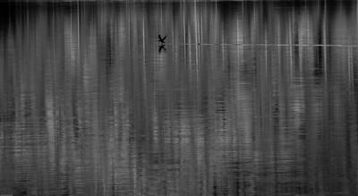Fugl inn for landing