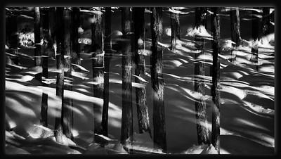 Vinterskogen