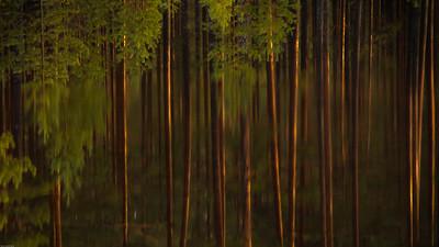 Speiling av trær i vannet