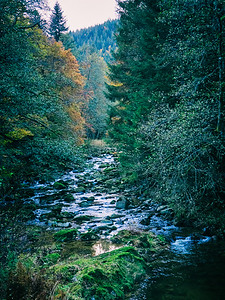 river in the black forest
