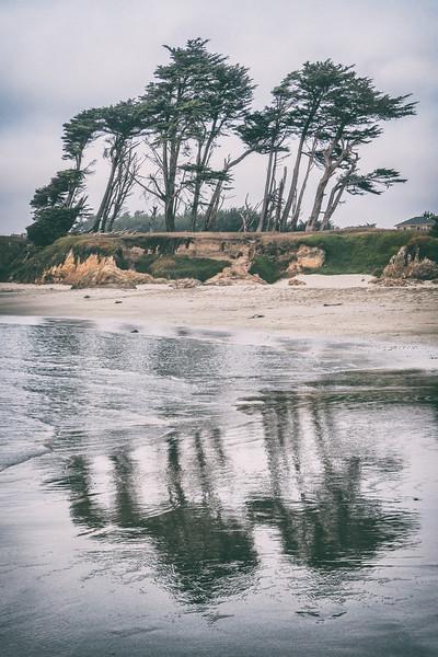 trees on ocean shore