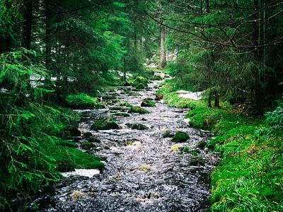 black forest river