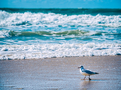 bird at the beach