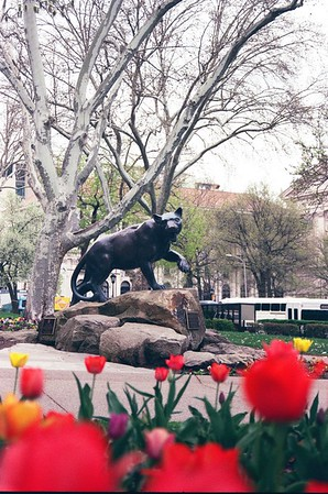 Panther Statue & Tulips - Kristen Lucero Photography