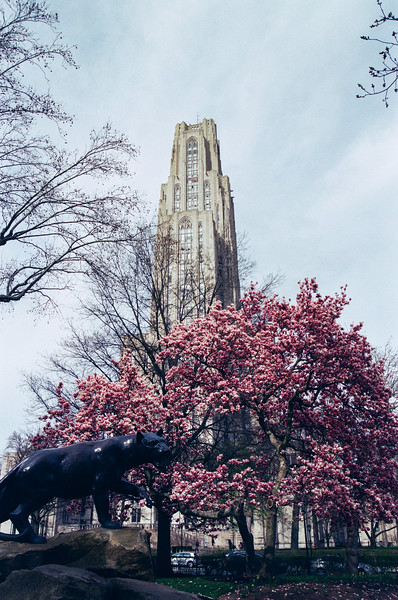 Spring Campus - Kristen Lucero Photography