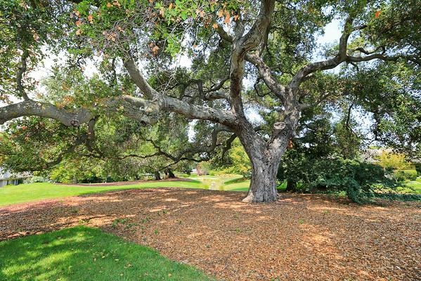 15 Deep Well Lane, Los Altos (Creekside Oaks)