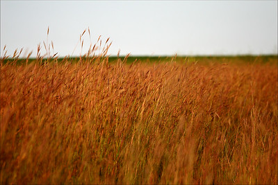 IMG_5873 big bluestem field