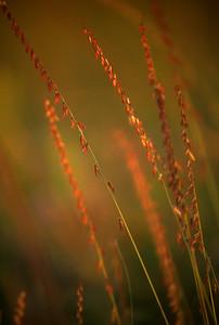 Side oats CPL scan