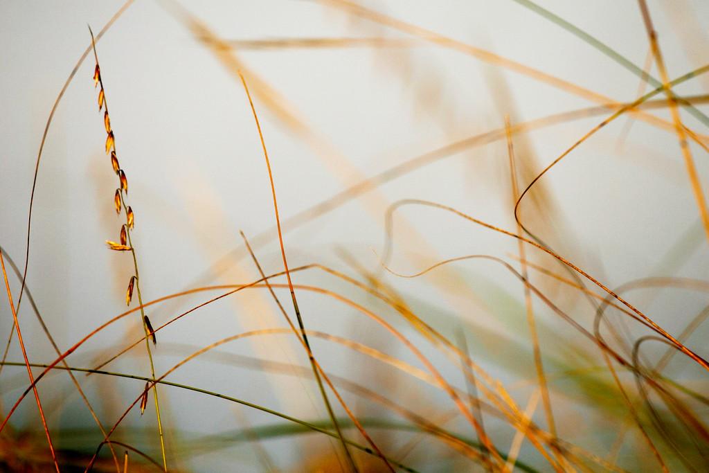 IMG_4810 grass