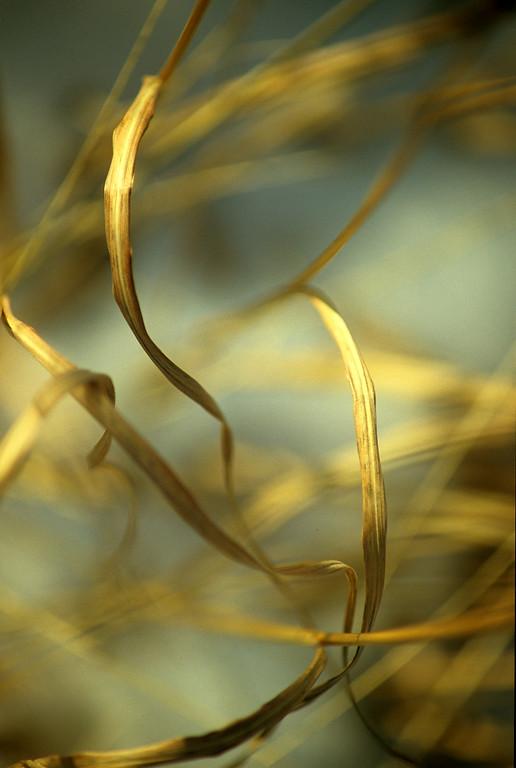 Frog Grass