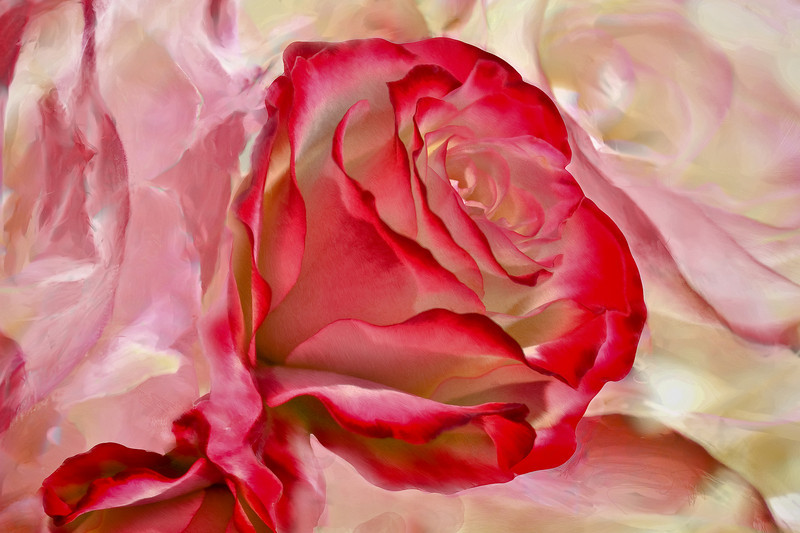 _Rose9059wbgroundv2