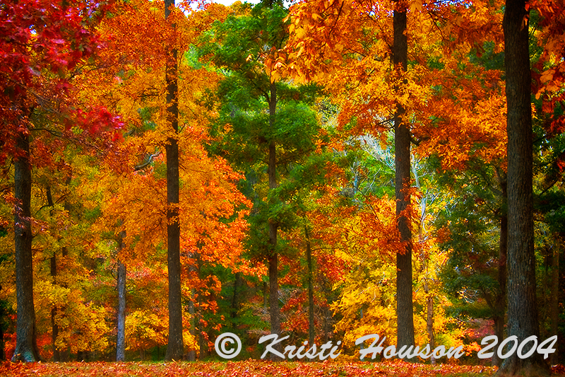 A Touch Of Autumn<br /> Miller's Park<br /> Benton, KY