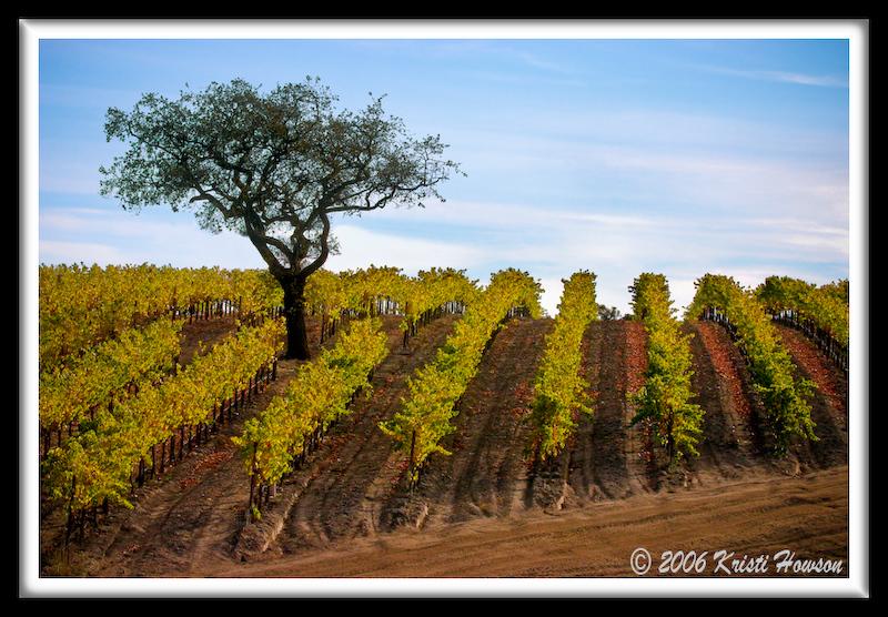 Zaca Vineyards