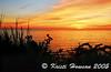 Silhouette Sunset<br /> Douglas Property
