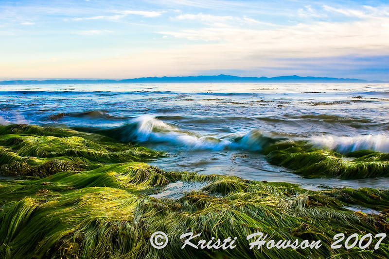 Eelgrass At Low Tide<br /> Hendry's Beach Eelgrass