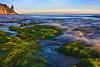 Hendry's Beach Eelgrass