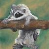 Raccoon - Oil Pastel