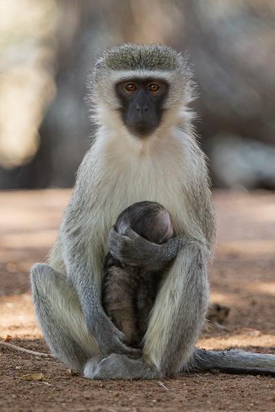 Kruger NP 2014