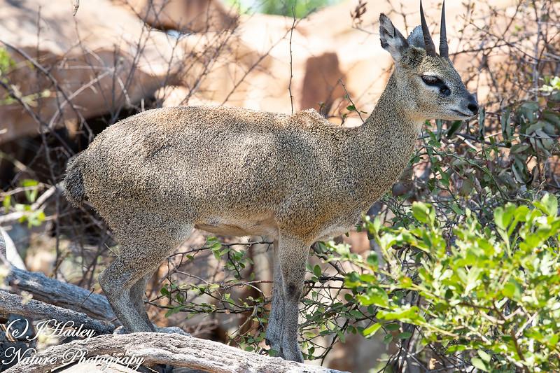 Kruger NP, South Africa