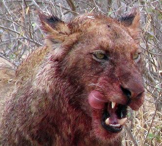 Kruger National Park - South Africa - 2006
