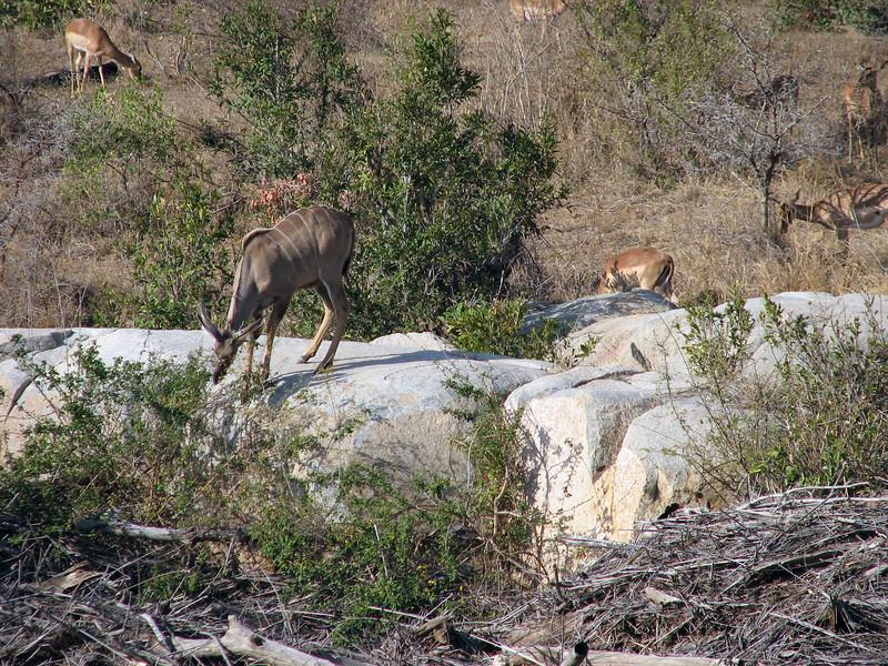 Kudu and Impala