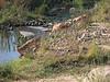 Sabie River - Impala