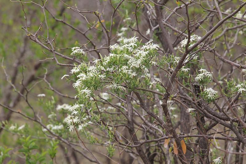 069 Flower
