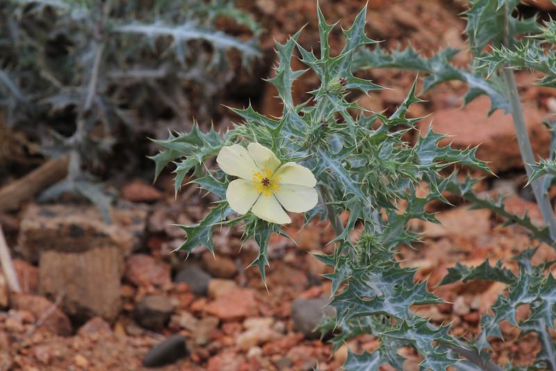 067 Flower