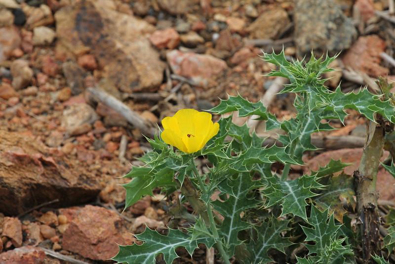 068 Flower