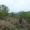 093 Landscape