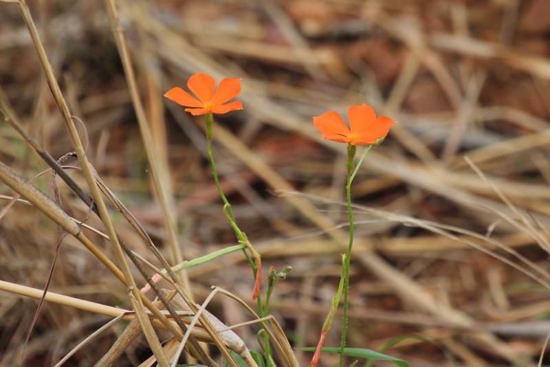 063 Flower