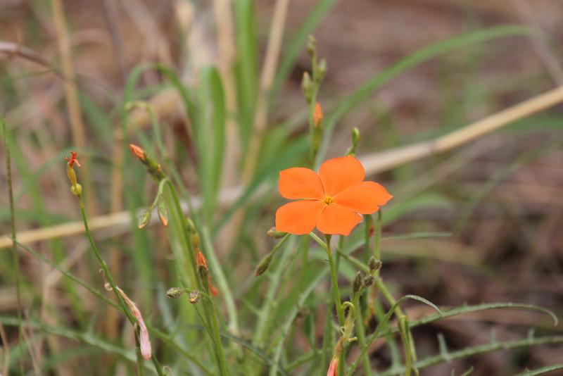 062 Flower