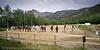 Oppstilling. Rideleir Skjomdalen 22.-27. juli 2012. Avslutningsoppvisning for foreldre.