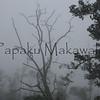 Uhiwai<br /> (c) Pualani Kanahele/Ulumauahi Kealiikanakaole
